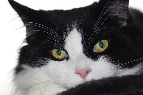 blackcat_640