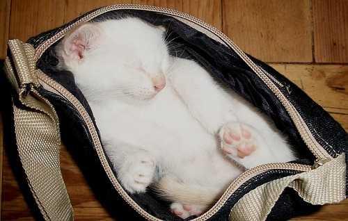 cat-20841