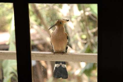bird-81889