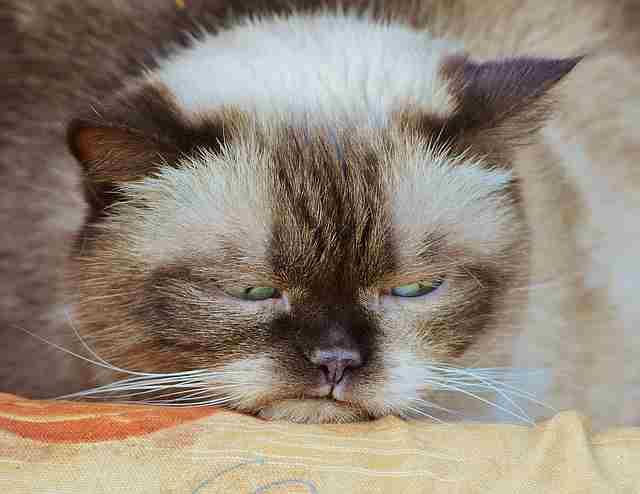 cat-1378203